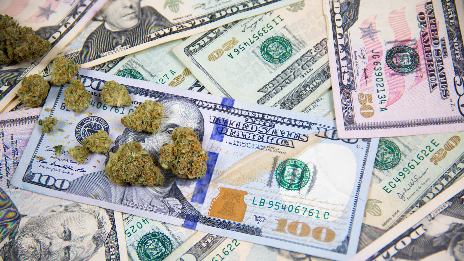 Marijuana buds on top of United States cash money