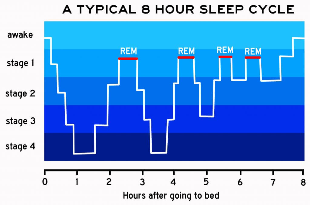 A chart of a typical eight hour sleep cycle