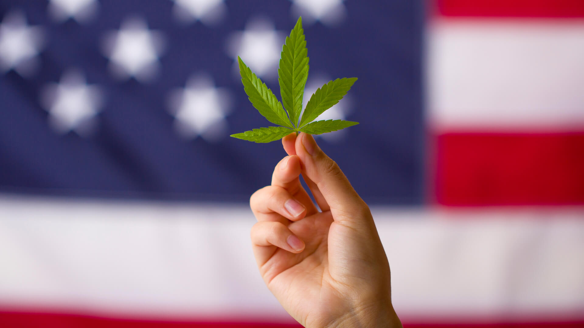 a hand holding up a marijuana leaf with the American flag in the background