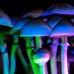 Magic mushrooms in a fluorescent light