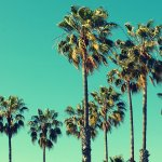 Palm Trees at Santa Monica beach on a teal background