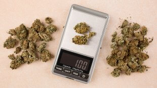 Cannabis buds on a digital scale top view