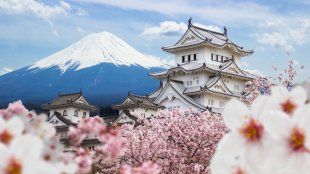 Himeji Castle and full cherry blossom with Fuji mountain background