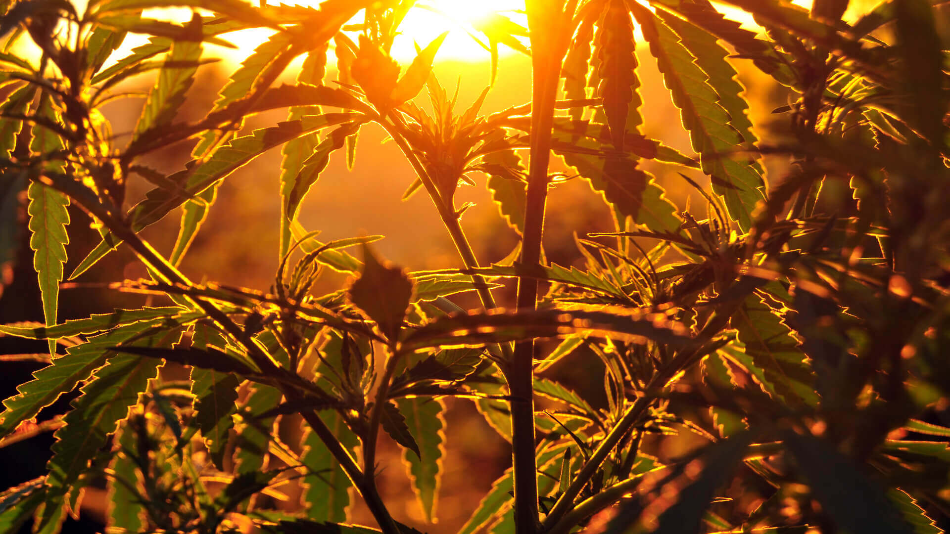 New Study Shows People Were Smoking Weed 12,000 Years Ago